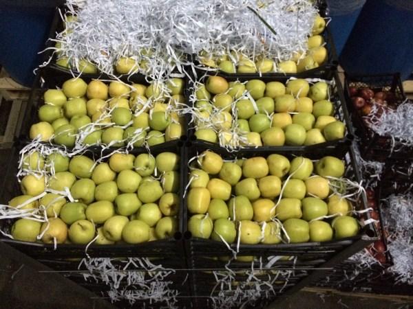Sebze-Meyve Hal İşletmeciliği