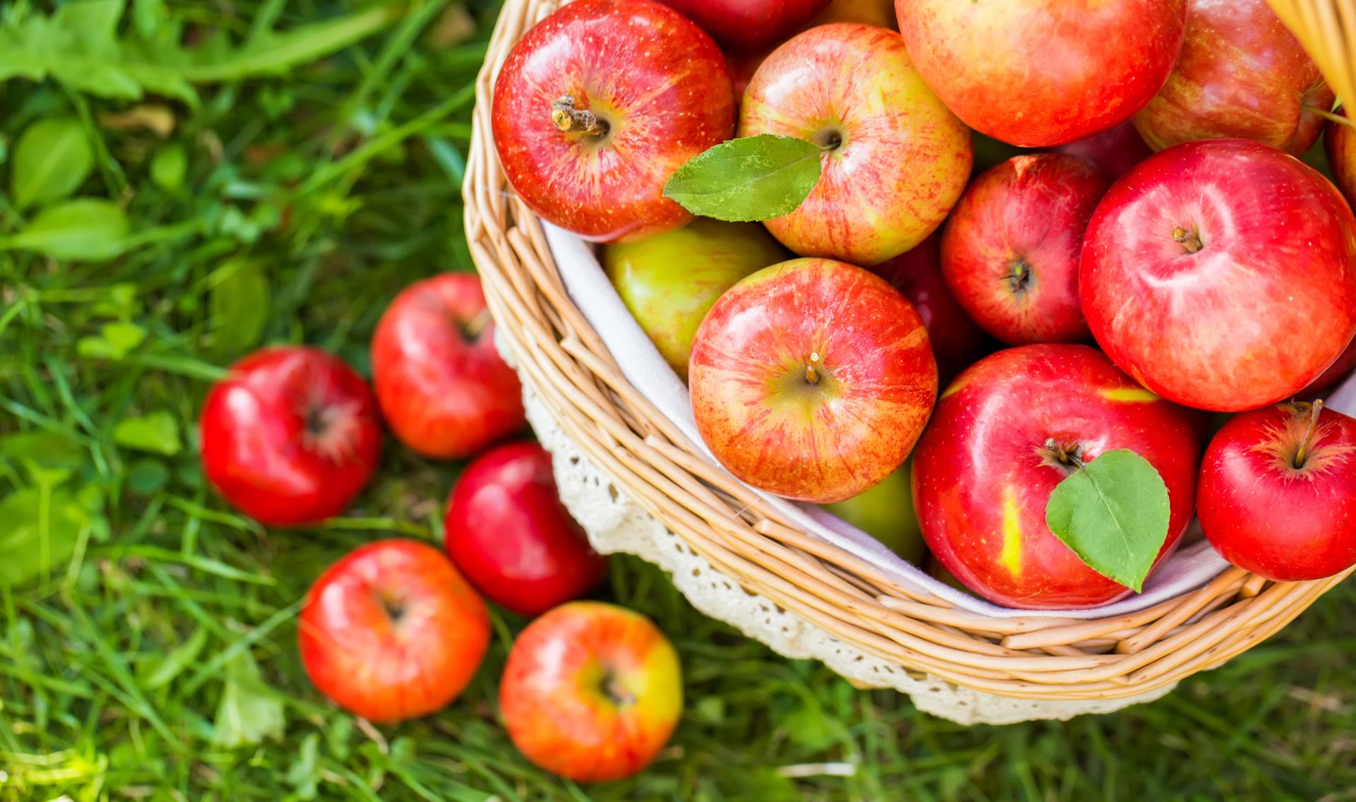 Yaş Meyve ve Sebze Alım Satımı